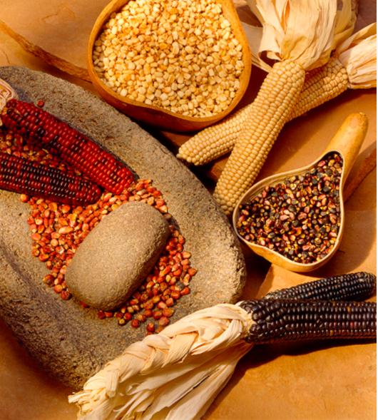 lois ellen frank profile native american food corn and grain