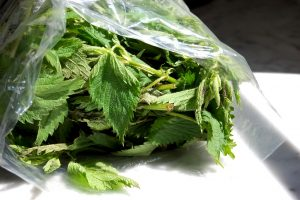 stinging nettles in bag